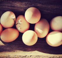 Frische Eier vom Biohof Gaßner