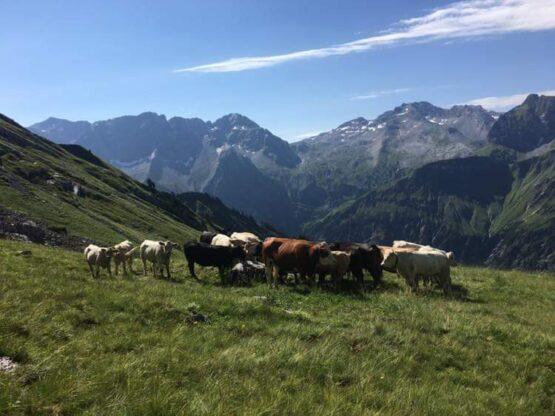 Alpe Iskarnai