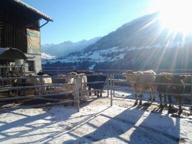 Biohof Gaßner im Winter